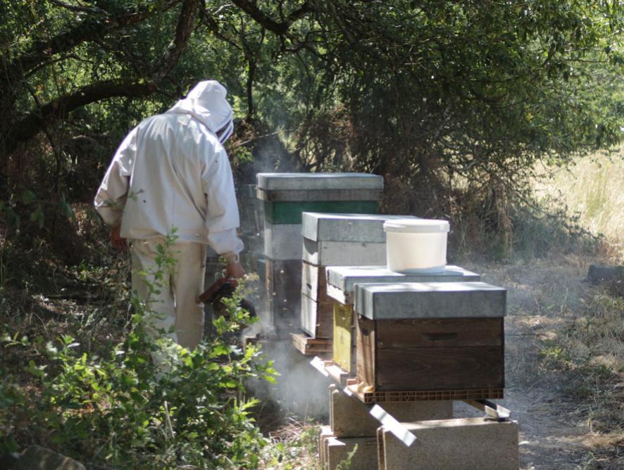 miel bio dans l'Indre l'abeille et la bête